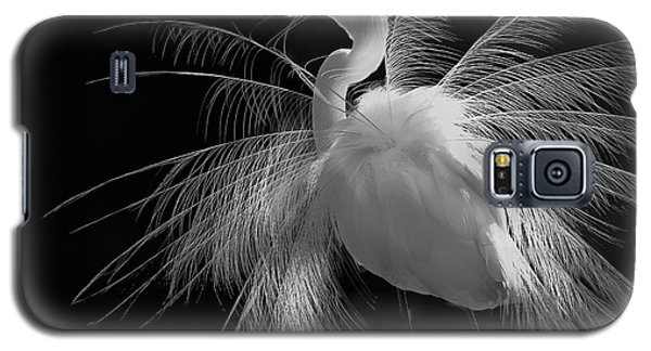 Great White Egret Portrait - Displaying Plumage  Galaxy S5 Case