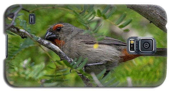 Greater Antillean Bullfinch Galaxy S5 Case
