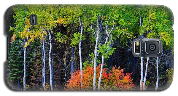 Green Aspens Red Bushes Galaxy S5 Case
