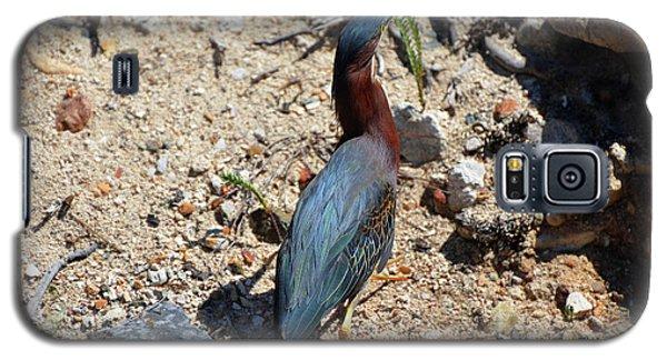 Green Heron Strut Galaxy S5 Case