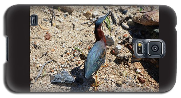 Green Heron Strut Galaxy S5 Case