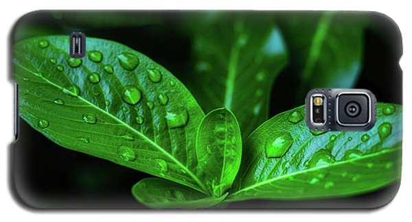 Green Leaf With Water Galaxy S5 Case