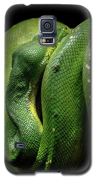 Green Tree Boa Galaxy S5 Case