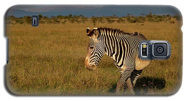 Grevy's Zebra Galaxy S5 Case