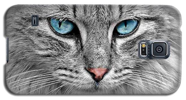 Grey Cat With Blue Eyes Galaxy S5 Case