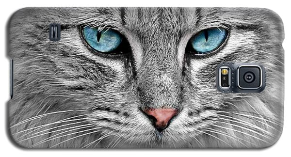 Grey Cat With Blue Eyes Galaxy S5 Case