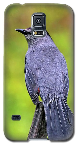 Grey Catbird Galaxy S5 Case