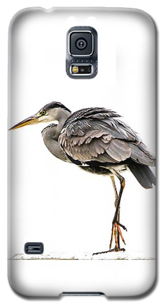 Grey Heron On Snow Galaxy S5 Case