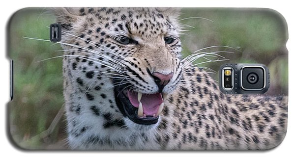 Grimacing Leopard Galaxy S5 Case