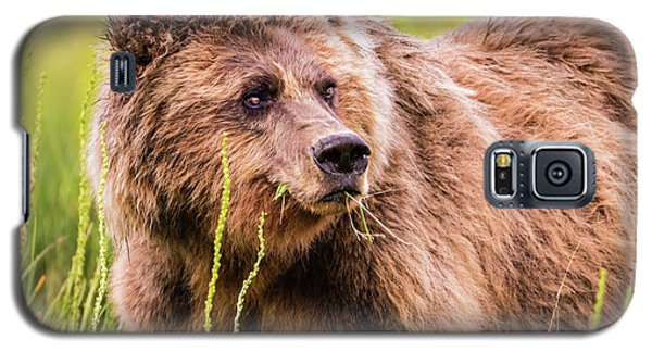 Grizzly In Lake Clark National Park, Alaska Galaxy S5 Case