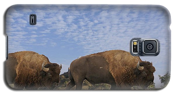 Group Of Bison Walking Against Rocky Mountains  Galaxy S5 Case