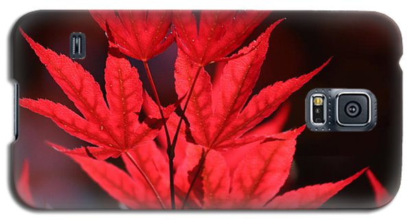 Guardsman Red Japanese Maple Leaves Galaxy S5 Case