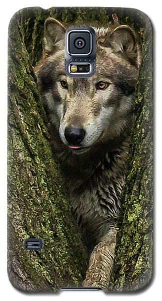 Hangin In The Tree Galaxy S5 Case