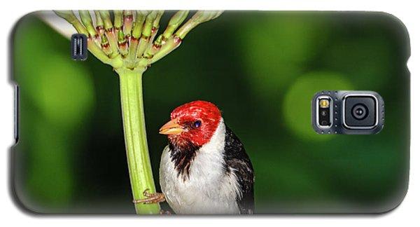 Happy Valentine's Day Bird Galaxy S5 Case