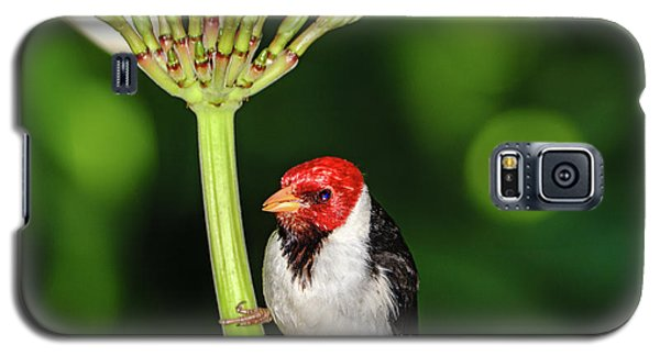 Happy Valentine's Day Bird Galaxy S5 Case