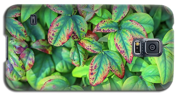 Harmony In The Garden Galaxy S5 Case