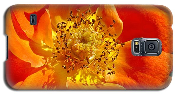 Heart Of The Orange Rose Galaxy S5 Case