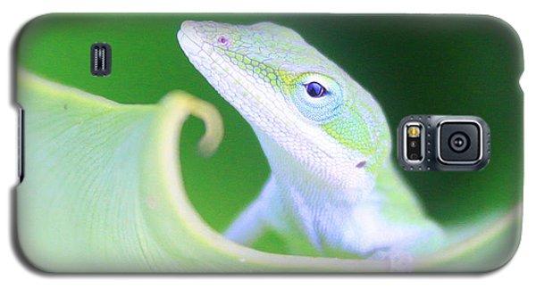 Hello, Anole. 2 Galaxy S5 Case