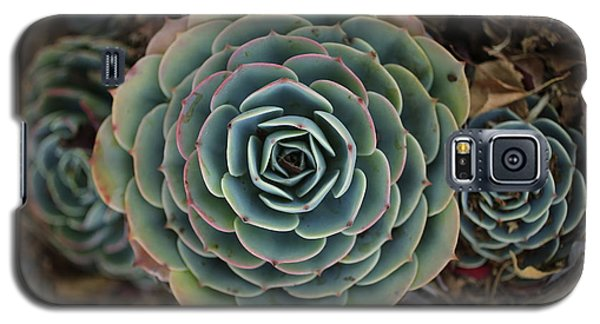 Hen And Chicks Succulent Galaxy S5 Case