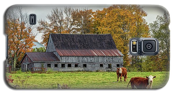Herefords In Fall Galaxy S5 Case