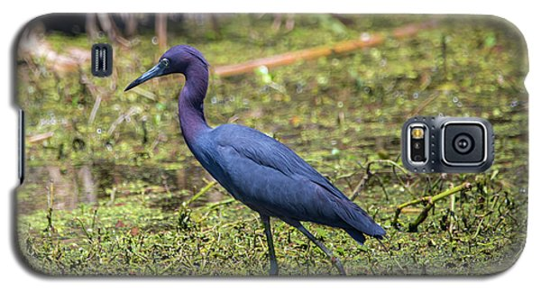 Heron Portrait Galaxy S5 Case