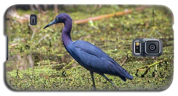 Heron Portrait Galaxy S5 Case