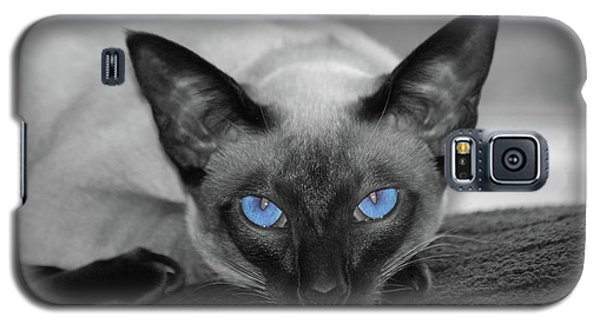 Hey There Blue Eyes - Siamese Cat Galaxy S5 Case