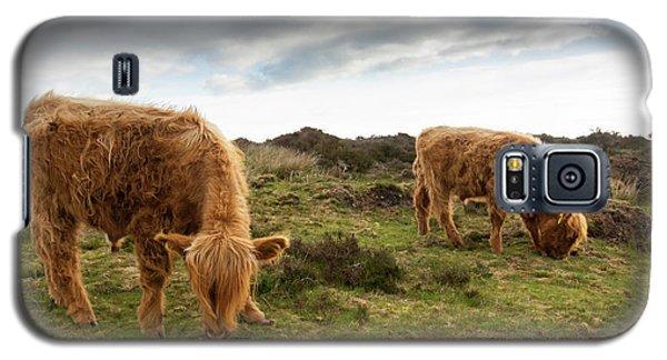 Highland Cattle Feeding At Baslow Edge Galaxy S5 Case