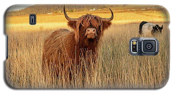 Highland Cows On The Farm Galaxy S5 Case