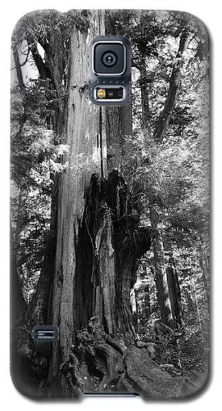 Historic Cedar Galaxy S5 Case