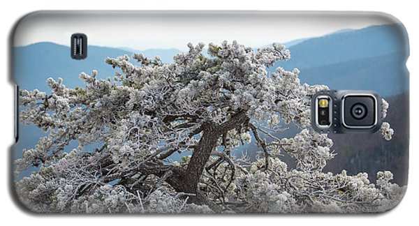 Hoarfrost In The Blue Ridge Mountains Galaxy S5 Case