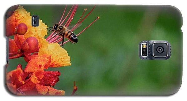 Honey Bee Extraction Galaxy S5 Case