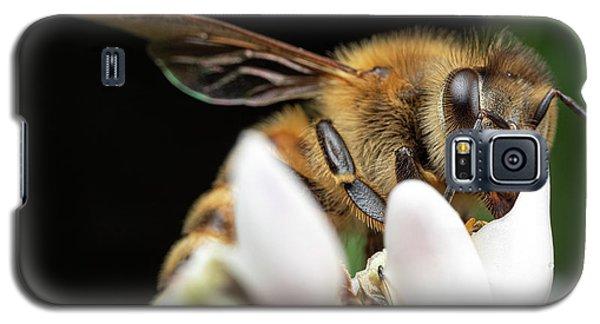 Honeybee Peeking Galaxy S5 Case