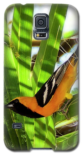 Hooded Oriole V1912 Galaxy S5 Case
