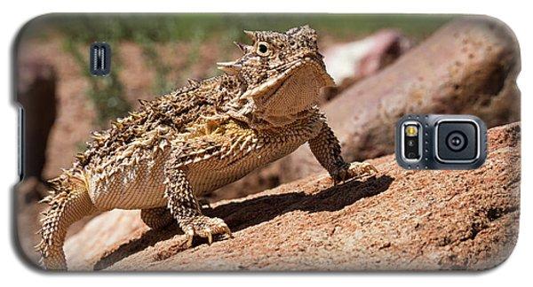 Horny Toad Galaxy S5 Case