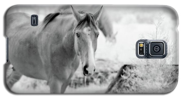 Horse In Infrared Galaxy S5 Case