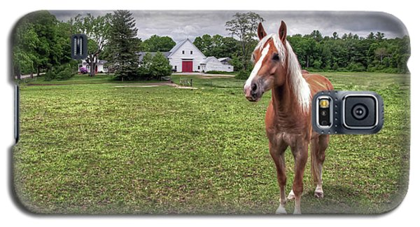 Horse In Pasture Galaxy S5 Case