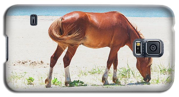 Horse On Beach Galaxy S5 Case