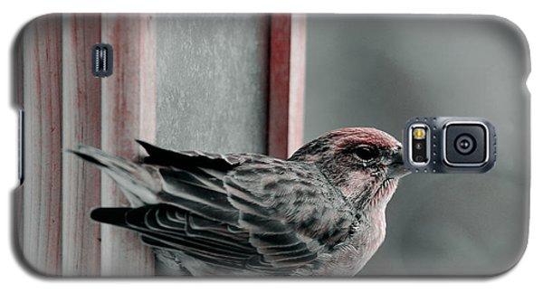 House Finch On Feeder Galaxy S5 Case