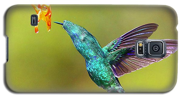 Humhum Bird Galaxy S5 Case