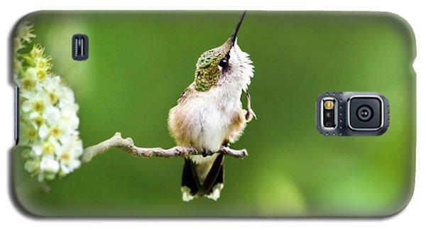 Hummingbird Flexibility Galaxy S5 Case