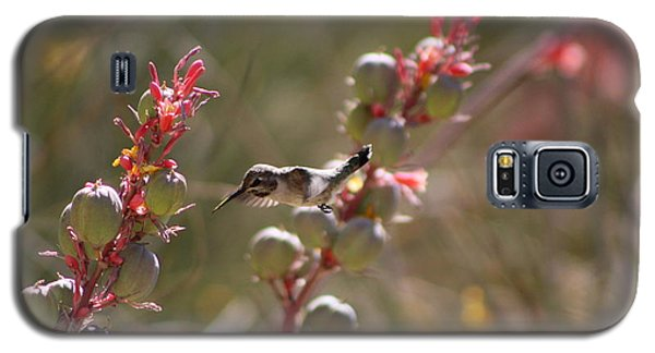 Hummingbird Flying To Red Yucca 1 In 3 Galaxy S5 Case