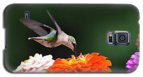 Hummingbird In Flight With Orange Zinnia Flower Galaxy S5 Case