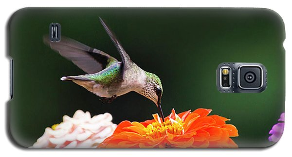 Hummingbird In Flight With Orange Zinnia Flower Galaxy S5 Case