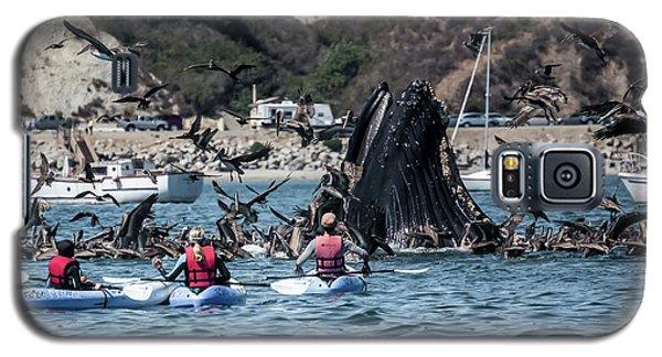 Humpbacks In Avila Harbor Galaxy S5 Case
