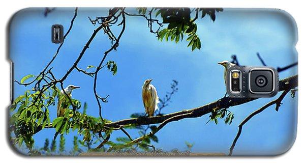 Ibis Perch - Virgin Nature Series Galaxy S5 Case
