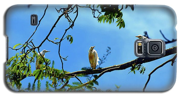 Ibis Perch - Virgin Nature Series Galaxy S5 Case
