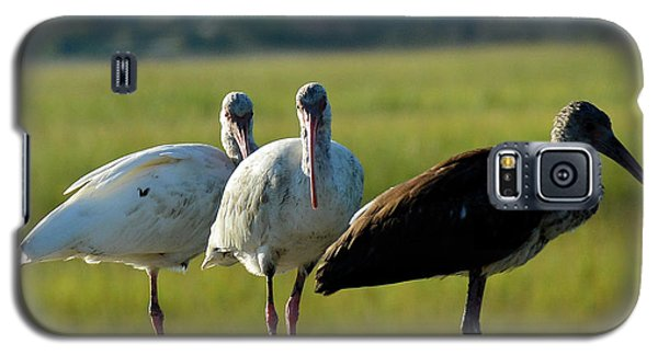 Ibises On The Lookout In Jekyll Island State Park Galaxy S5 Case