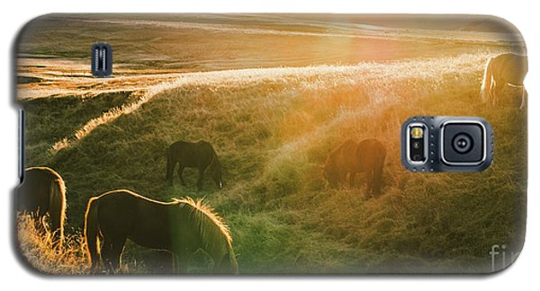 Icelandic Landscapes, Sunset In A Meadow With Horses Grazing  Ba Galaxy S5 Case