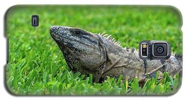 Iguana In Grass Galaxy S5 Case